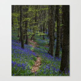 Bluebell trail at Margam woods Canvas Print