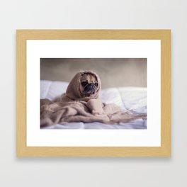 Sad Pug Framed Art Print