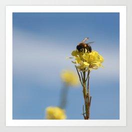 Honey bee on a wildflower Art Print