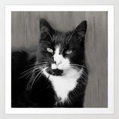 Tuxedo Cat Art Print