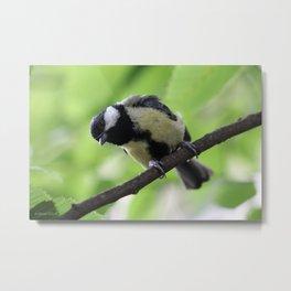 Bird nature photo Metal Print