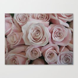 Blush Pink Tea Roses Canvas Print