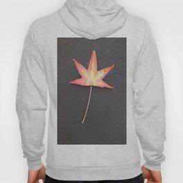 Starfire Hoody