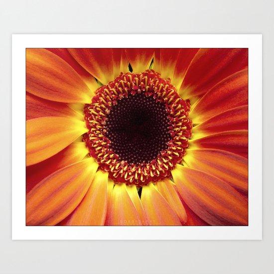 Harvest Sunflower Art Print