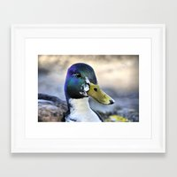 duck Framed Art Prints featuring Duck by  Alexia Miles photography