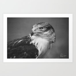 Red-tailed Hawk II BW Art Print