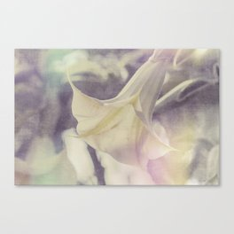Angel's Trumpet Canvas Print