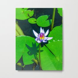 The Water Lilly Metal Print