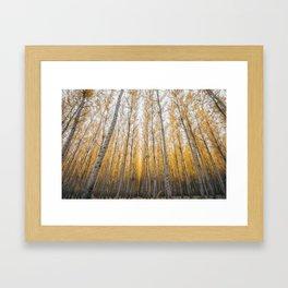 Boardman Trees Framed Art Print