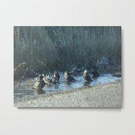 Splish Splash Metal Print