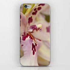 Cambria 5-8022 iPhone & iPod Skin