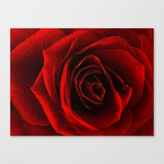 rose d'amour Canvas Print
