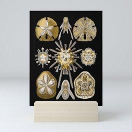 Golden Sand Dollars Echinidea Mini Art Print
