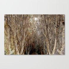 Wonderwood Canvas Print