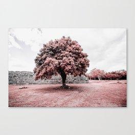 Dzibilchaltun Tree Canvas Print