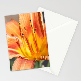 Tigerlily Stationery Cards