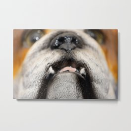 love, print, bulldog, canine, collection, icons, portrait, breed, pedigree, face, puppy, cartoon, ba Metal Print