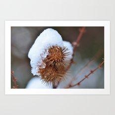 Snowy Burrs Art Print