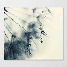 dandelion blue IX Canvas Print