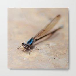 Dragonfly. Metal Print