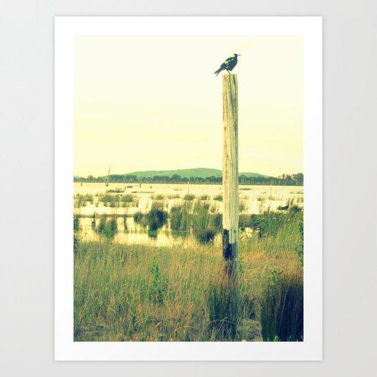Magpie watching Art Print