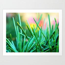 Pine/Fir Tree Art Print