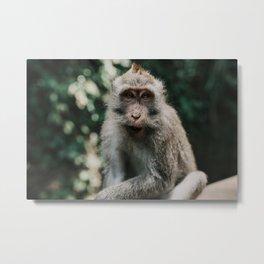 Monkey See Metal Print