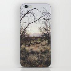 Coyote Canopy iPhone & iPod Skin