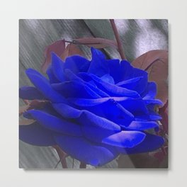 Rose in Blue Metal Print