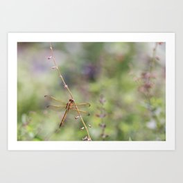 Dragon Fly in Audubon Park Art Print