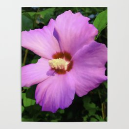 Rose OF Sharon In Mid Summer Poster