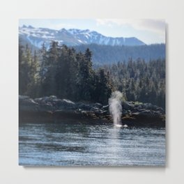 Alaskan Whale Metal Print