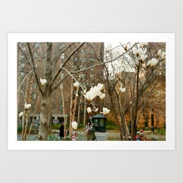 Autumn Magnolia Art Print