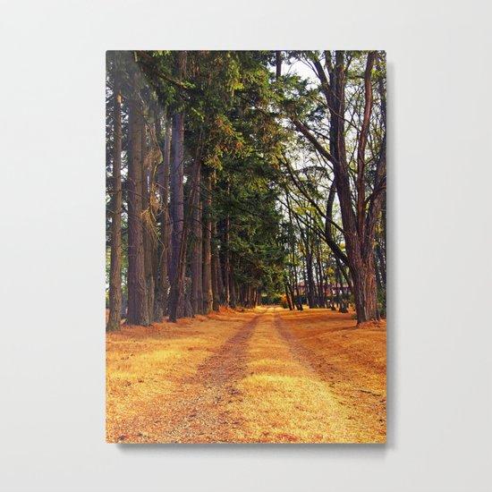 September path Metal Print