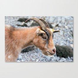 Beige Goat portrait 8149 Canvas Print