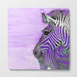 Zebra Purple and White Metal Print