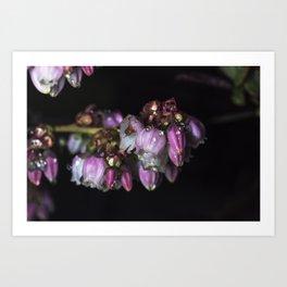 Blueberry blossom rain drops Art Print