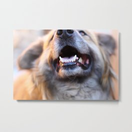 Agressive dog Metal Print