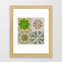 Grasshouse Configuration Flower  ID:16165-050526-69250 Framed Art Print