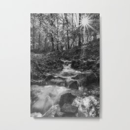 Forest Stream Sunrise Metal Print