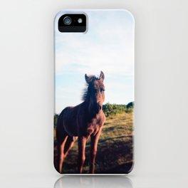 Dartmoor Pony Portrait (3) iPhone Case