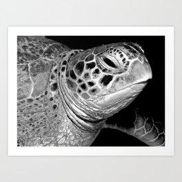 Turtle up close Art Print