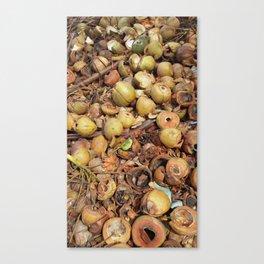 Coconut Oil Canvas Print