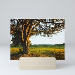 A Large Single Tree at Sunset Mini Art Print