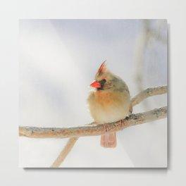Sunny Cardinal Metal Print