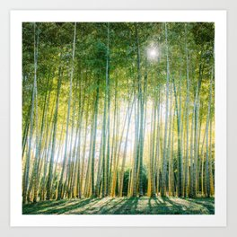 Japanese Bamboo Forest Fine Art Print Art Print