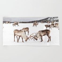 Playing Reindeers In Snow In Tromsø | North Of Norway Photo | Travel Photography Art Print Beach Towel
