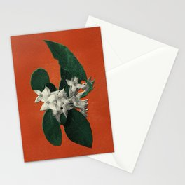 Invasive Species Series: Autumn Olive Stationery Cards
