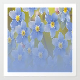Forget-me-not flowers - summer beauty #society6 #buyart Art Print
