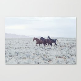 The wild horses of Namibia / Oct 2013 Canvas Print